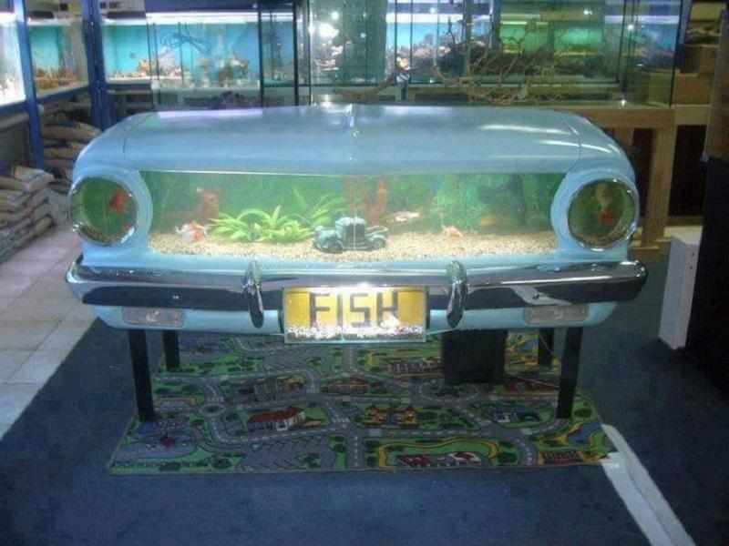 car fish tank